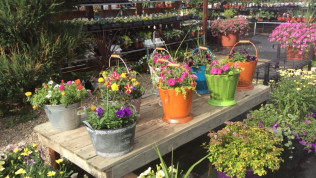Annual Bedding Plants